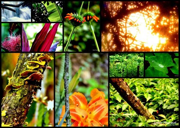 6-Merveilleuse Nature.jpg